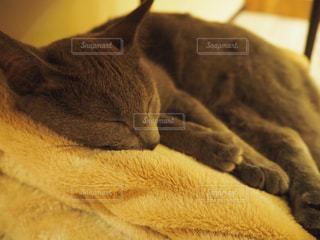 猫の写真・画像素材[683834]
