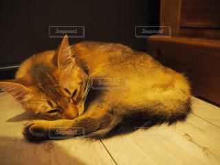 猫の写真・画像素材[683835]