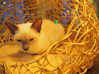 猫の写真・画像素材[683838]