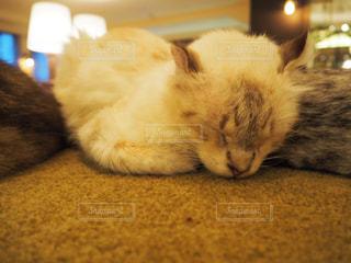 猫の写真・画像素材[683841]