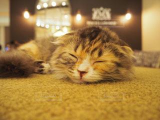 猫の写真・画像素材[683842]
