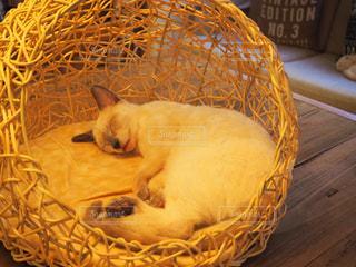 猫の写真・画像素材[683845]