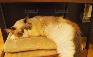 猫の写真・画像素材[683846]