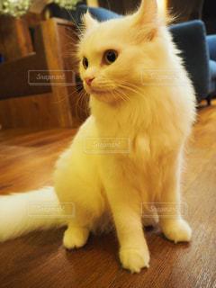 猫の写真・画像素材[683848]