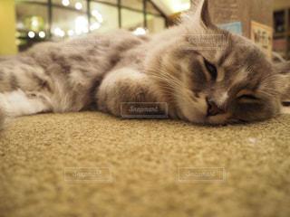 猫の写真・画像素材[683849]