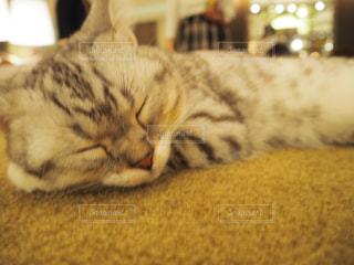 猫の写真・画像素材[683850]
