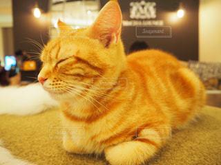 猫の写真・画像素材[683851]