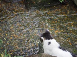 猫の写真・画像素材[684306]