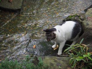 猫の写真・画像素材[684307]
