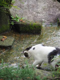 猫の写真・画像素材[684308]
