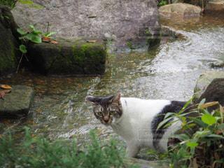 猫の写真・画像素材[684309]