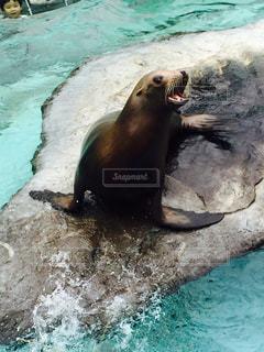 水族館の写真・画像素材[684315]