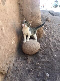 猫の写真・画像素材[684362]