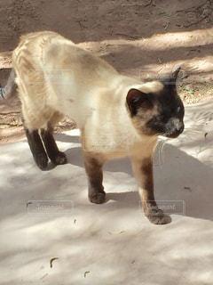 猫の写真・画像素材[684363]