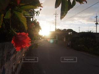 夕日の写真・画像素材[438044]