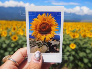 夏の写真・画像素材[439595]