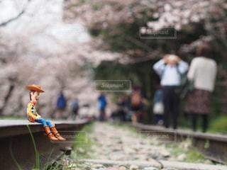 桜の写真・画像素材[440322]