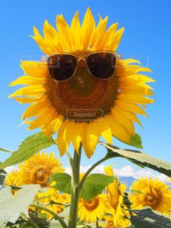 夏の写真・画像素材[440330]