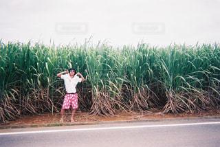 沖縄の写真・画像素材[441694]