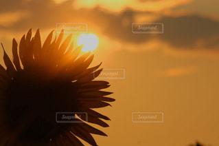 夕日の写真・画像素材[655987]