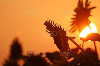 夕日の写真・画像素材[655990]
