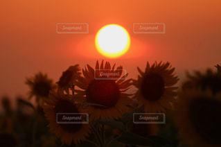 夕日の写真・画像素材[655994]