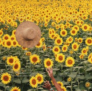 夏の写真・画像素材[683037]