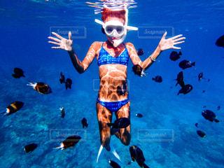 水体で泳ぐ犬の写真・画像素材[799595]