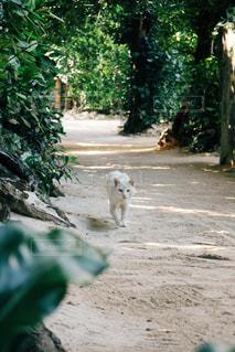 未舗装の道路の上を歩く犬の写真・画像素材[1073112]