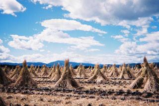 干し草の山の写真・画像素材[1562894]