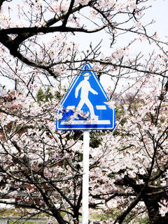 桜の写真・画像素材[2073824]