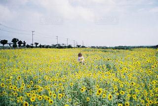 道端に広がる黄色の写真・画像素材[2327495]