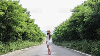 夏の日の写真・画像素材[2403427]