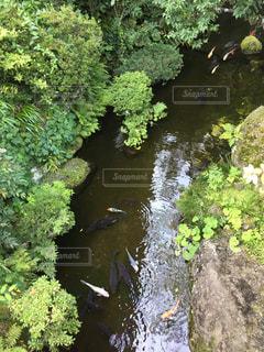 魚の写真・画像素材[438395]