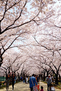 春 - No.438331