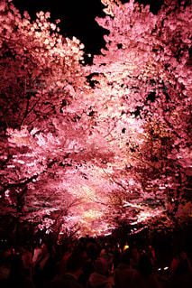 春 - No.438332