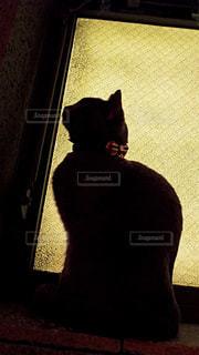 猫の写真・画像素材[444347]