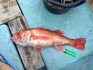魚の写真・画像素材[438828]