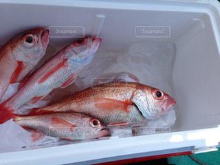 魚の写真・画像素材[438829]