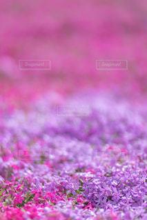 近くの花のアップの写真・画像素材[1129484]