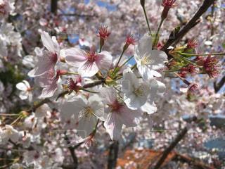 花の写真・画像素材[439334]