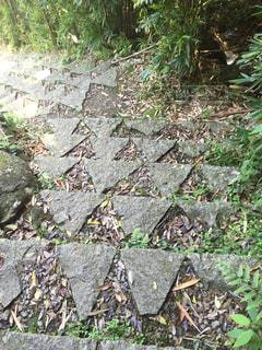 熊野古道の写真・画像素材[439556]