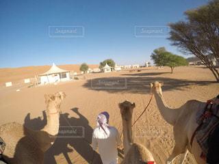 ラクダに乗って散歩の写真・画像素材[1108532]