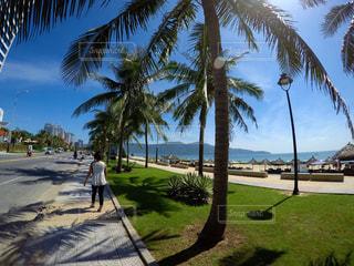ヤシの木とビーチの写真・画像素材[1108548]