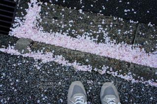 桜ひらひらの写真・画像素材[1108622]