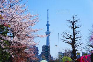 浅草からのスカイツリーの写真・画像素材[1258899]
