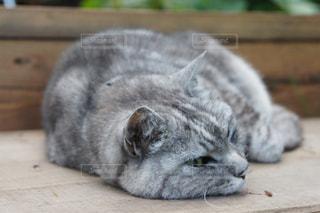 木製の表面の上に横たわる猫の写真・画像素材[1307960]