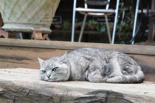 イケメン猫の写真・画像素材[1307961]