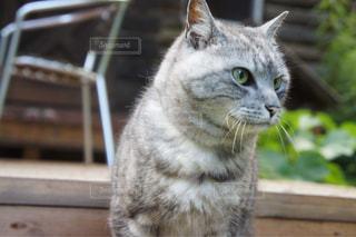番猫の写真・画像素材[1309258]