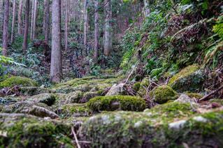 森の中の植物の写真・画像素材[2221433]